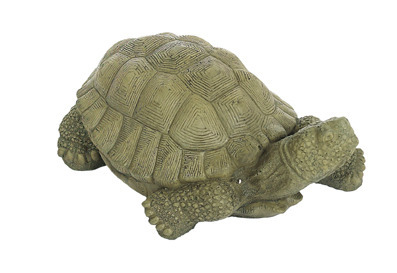 XL Snapping Turtle